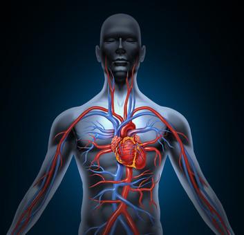 Sistema de circulación de corazón