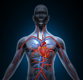 Heart circulation system
