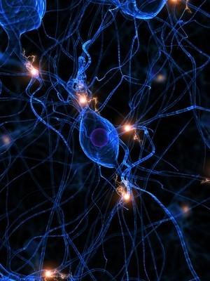 leistungsfähige Nervenzellen