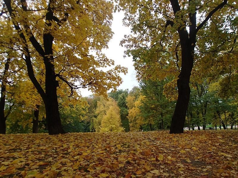 王宮公園は黄葉まっさかり