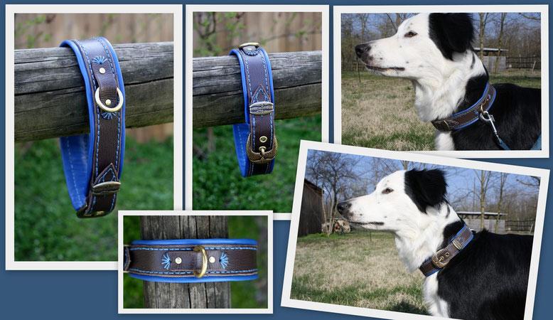 *blue lagoon* Hundehalsband für 47cm Halsumfang. Dunkelbraun mit wunderschönem Ozean blauem Nappaleder unterlegt, geschmückt mit messingverziehrten Schnallen