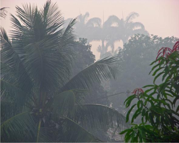 lluvia en la selva