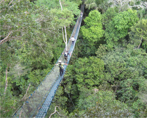 canopy walk way