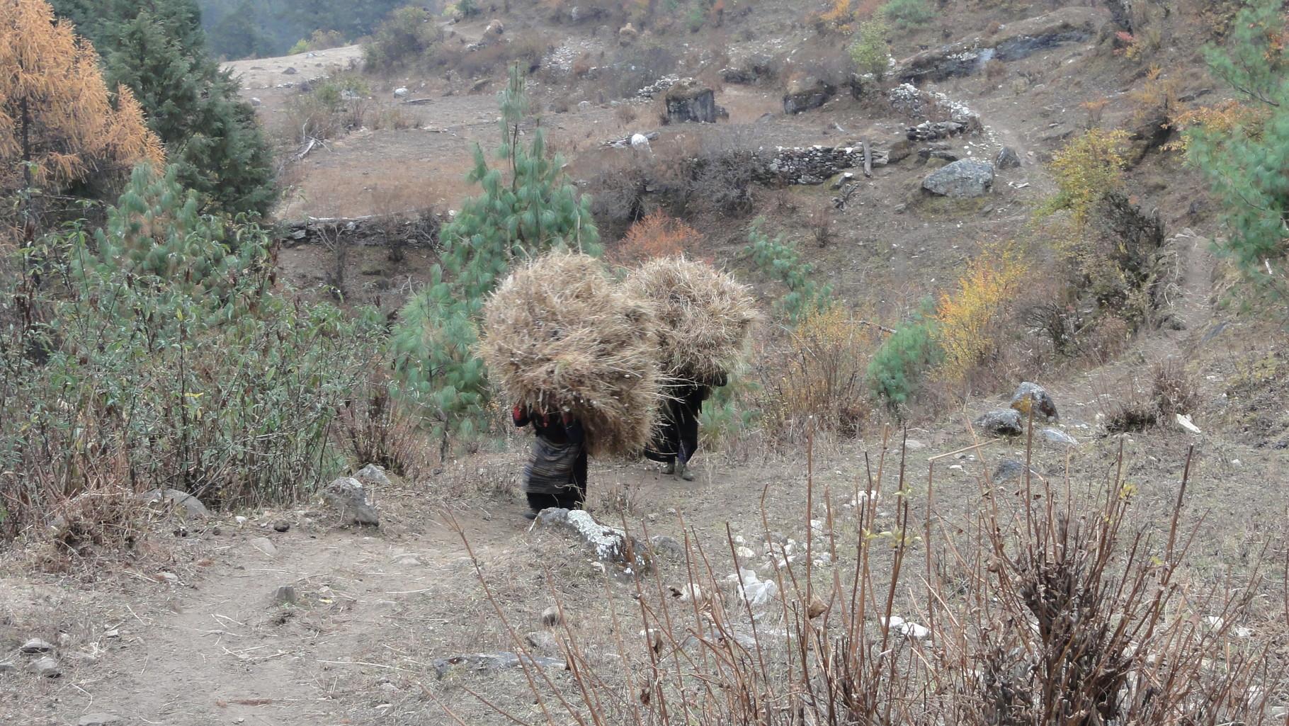 Staunen und Respekt vor der Kraft/Geschicklichkeit der Nepalis erfahren