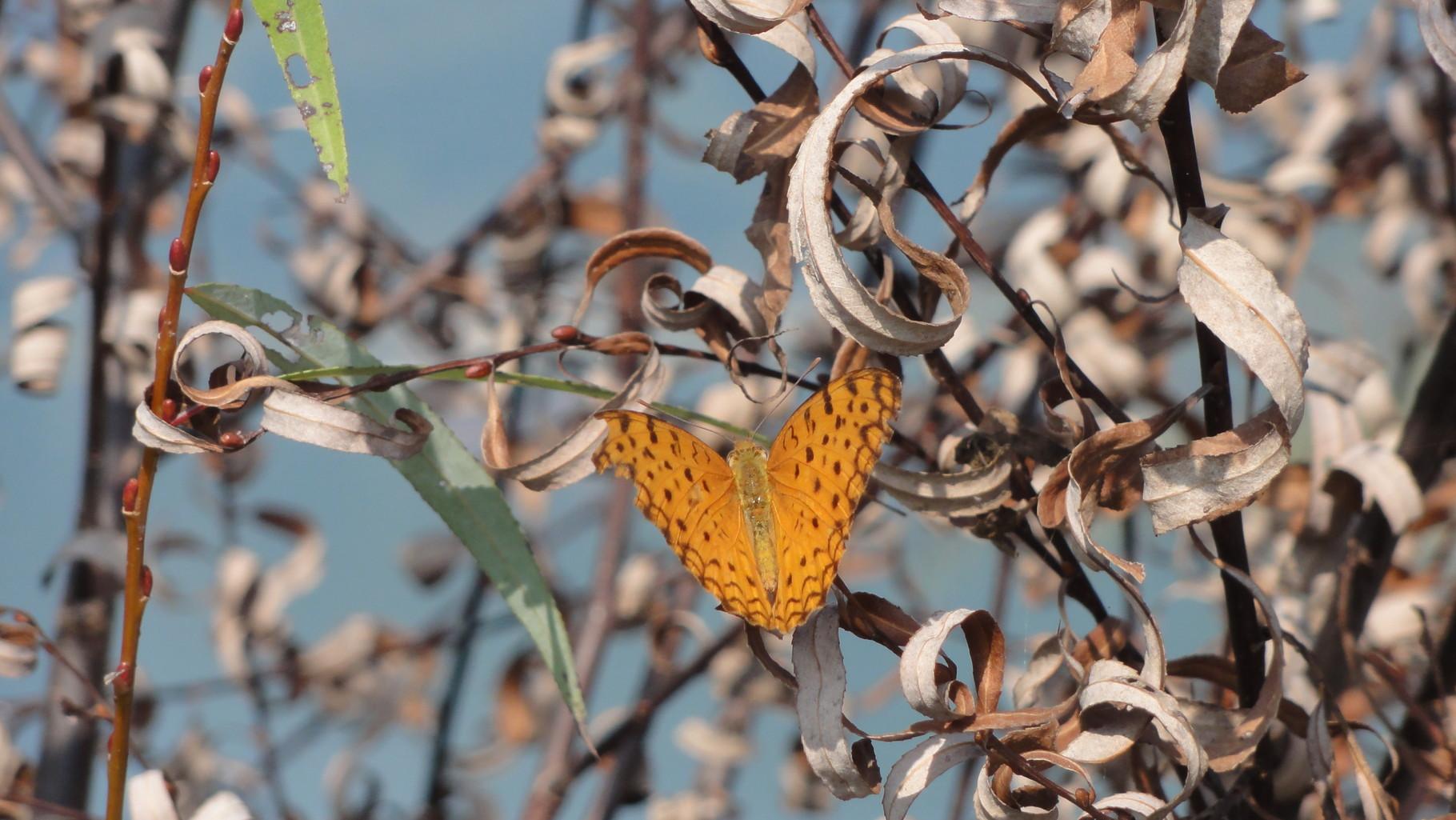 Schmetterlinge verfolgen