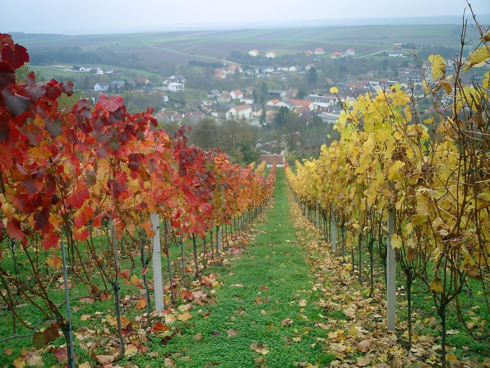 Blick auf Hannersdorf im Herbst
