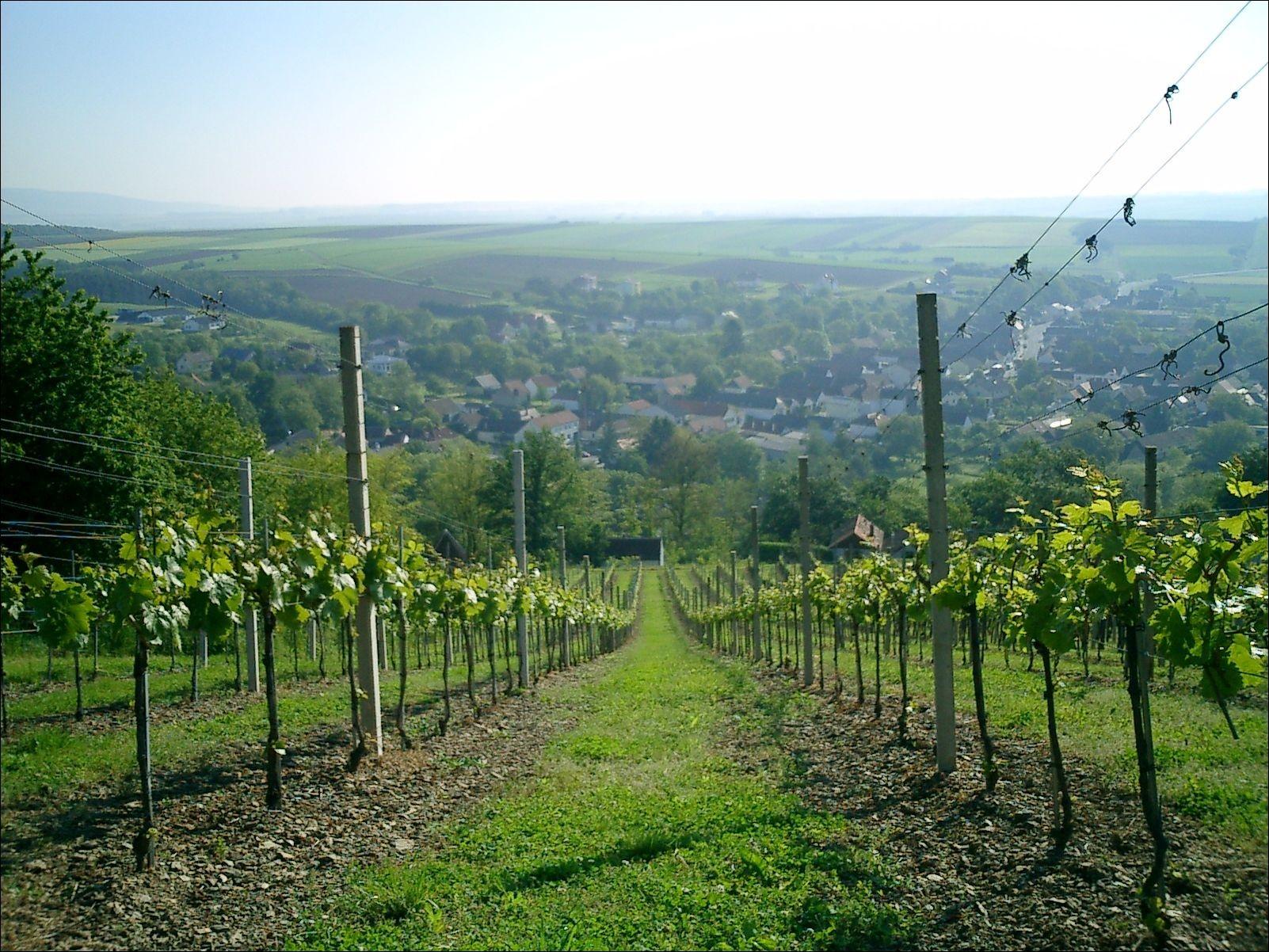 Blick auf Hannersdorf im Frühjahr
