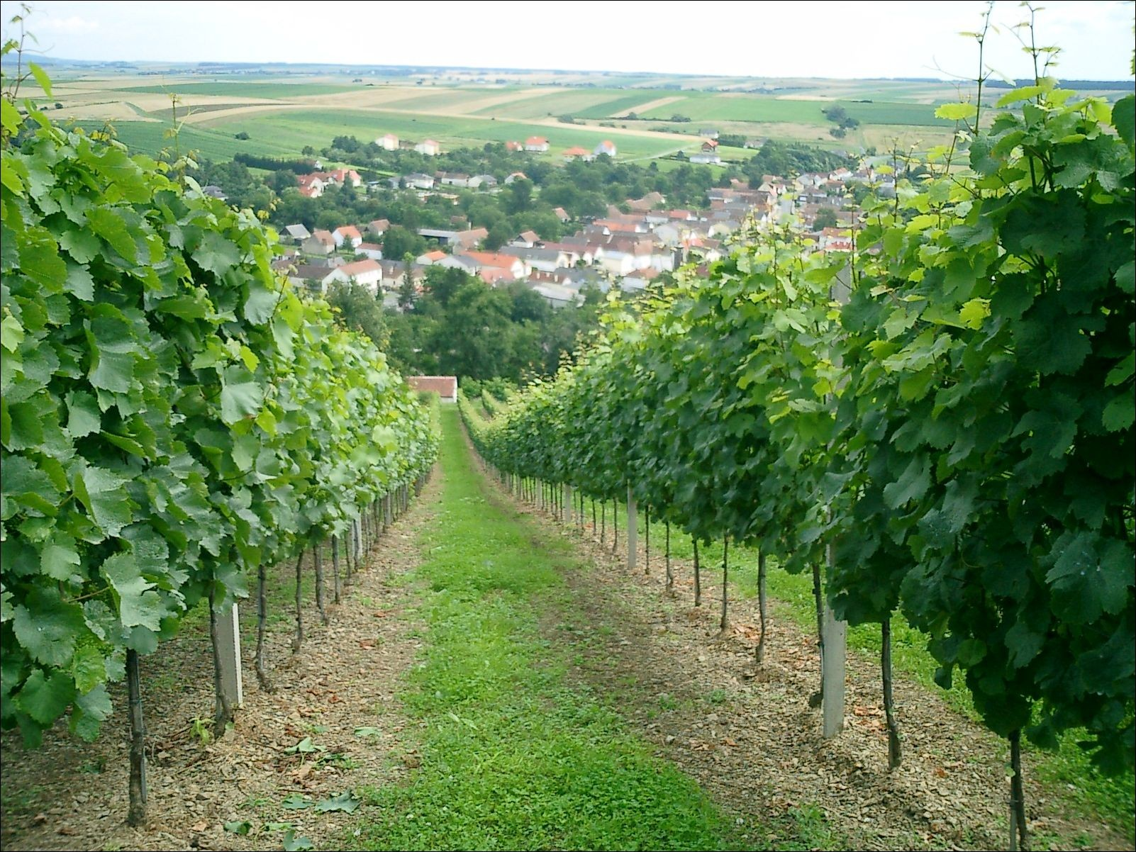 Blick auf Hannersdorf im Sommer