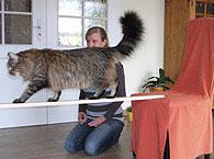 Clickertraining für Katzen
