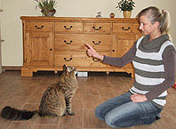 Clickertraingin für Katzen - Übung: Sitz