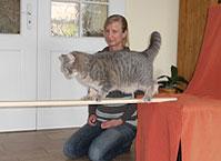Clickertraining für Katzen Übung 2