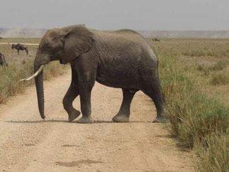 Safari w Kenii, Park Narodowy Tsavo