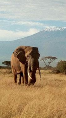 Safari w Kenii, Amboseli, Kilimandżaro
