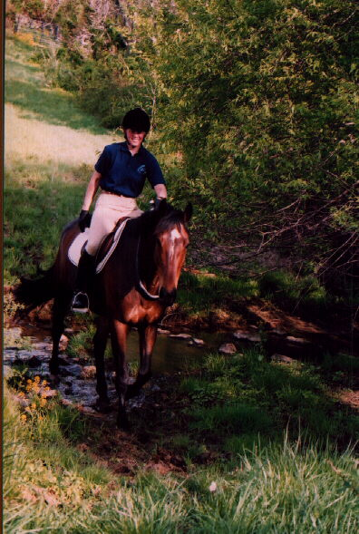 Riding horse bridleless through a stream