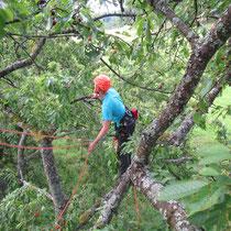 Obstbaumpflege