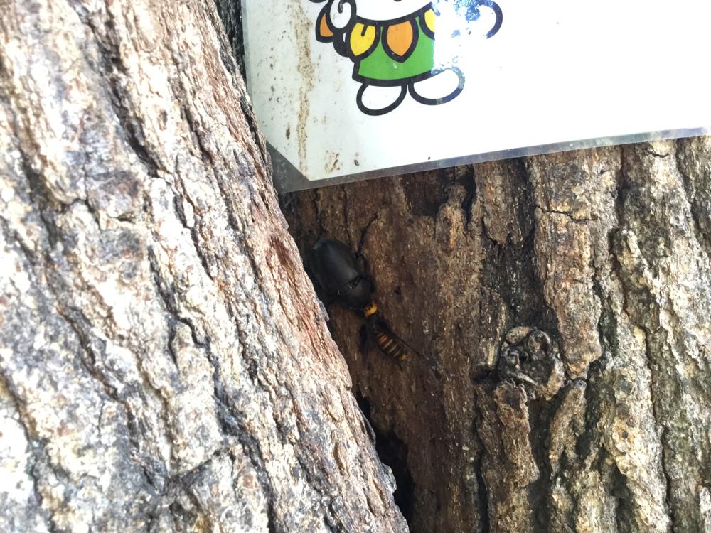 カブトムシとハチの争い