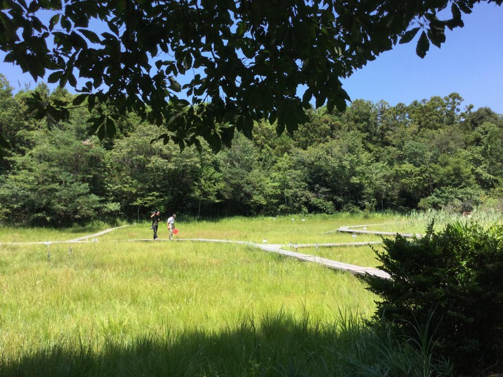 緑豊かな湿原