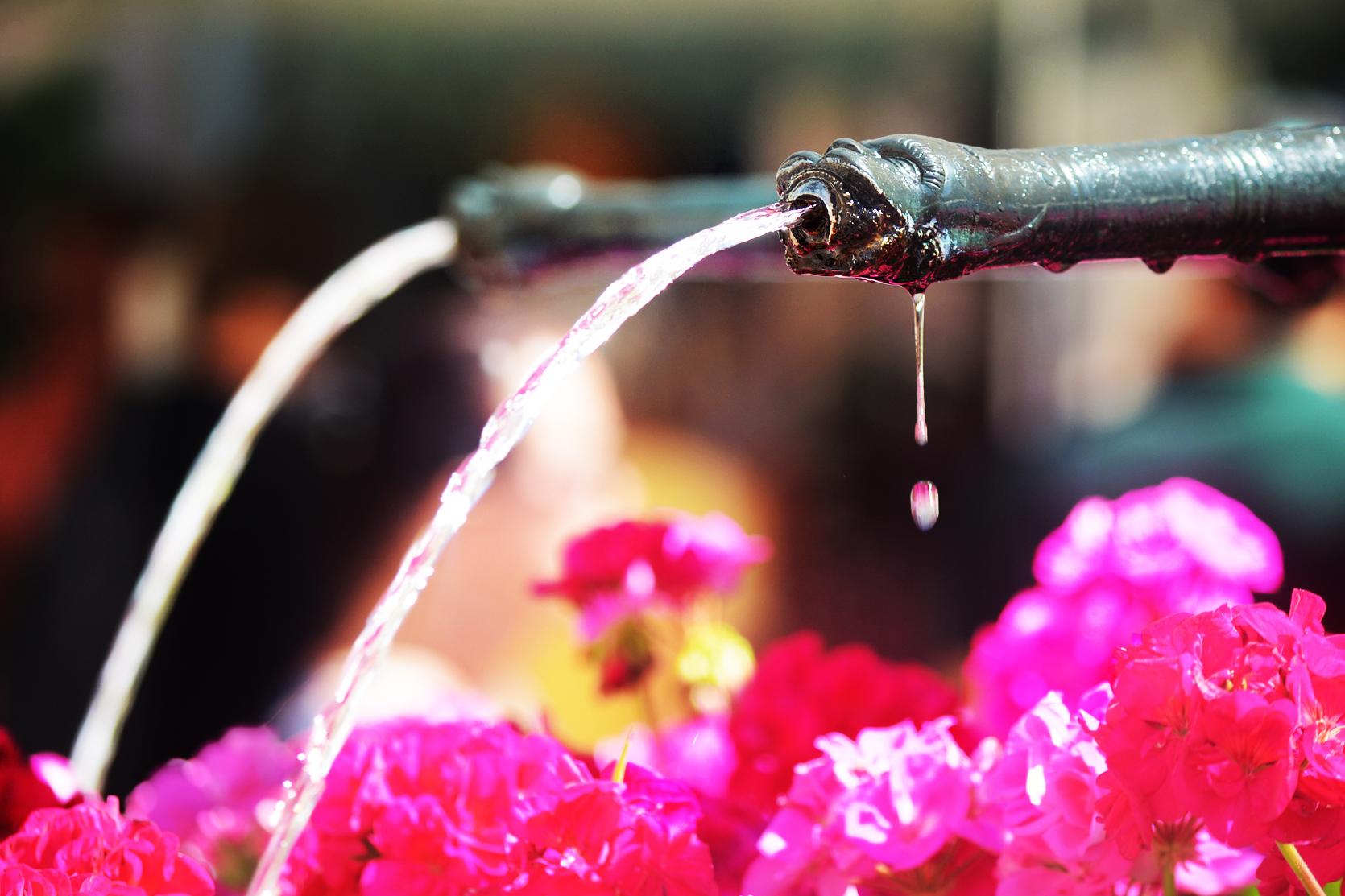 Kaum in der Altstadt angekommen sind die historischen Brunnen zu sehen, die aufwändig von der Stadtgärterei mit Blumen verziert wurden.