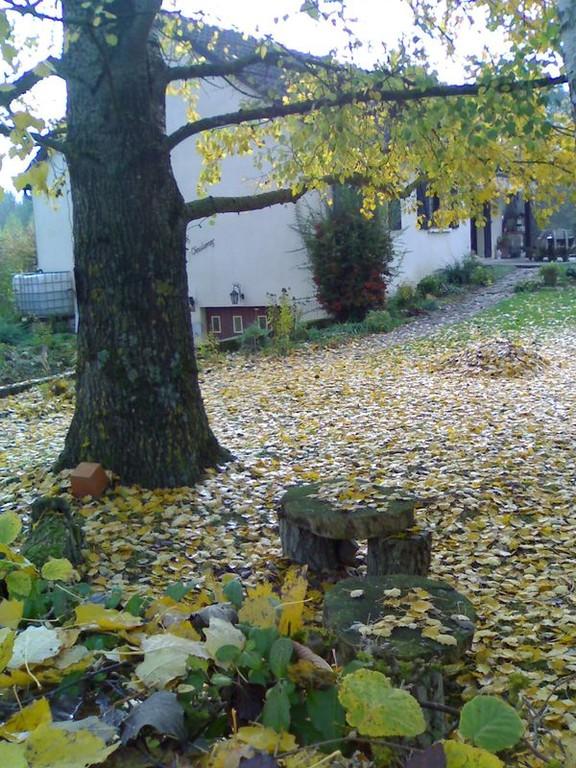 Si le ramassage de feuilles vous tente...bienvenue
