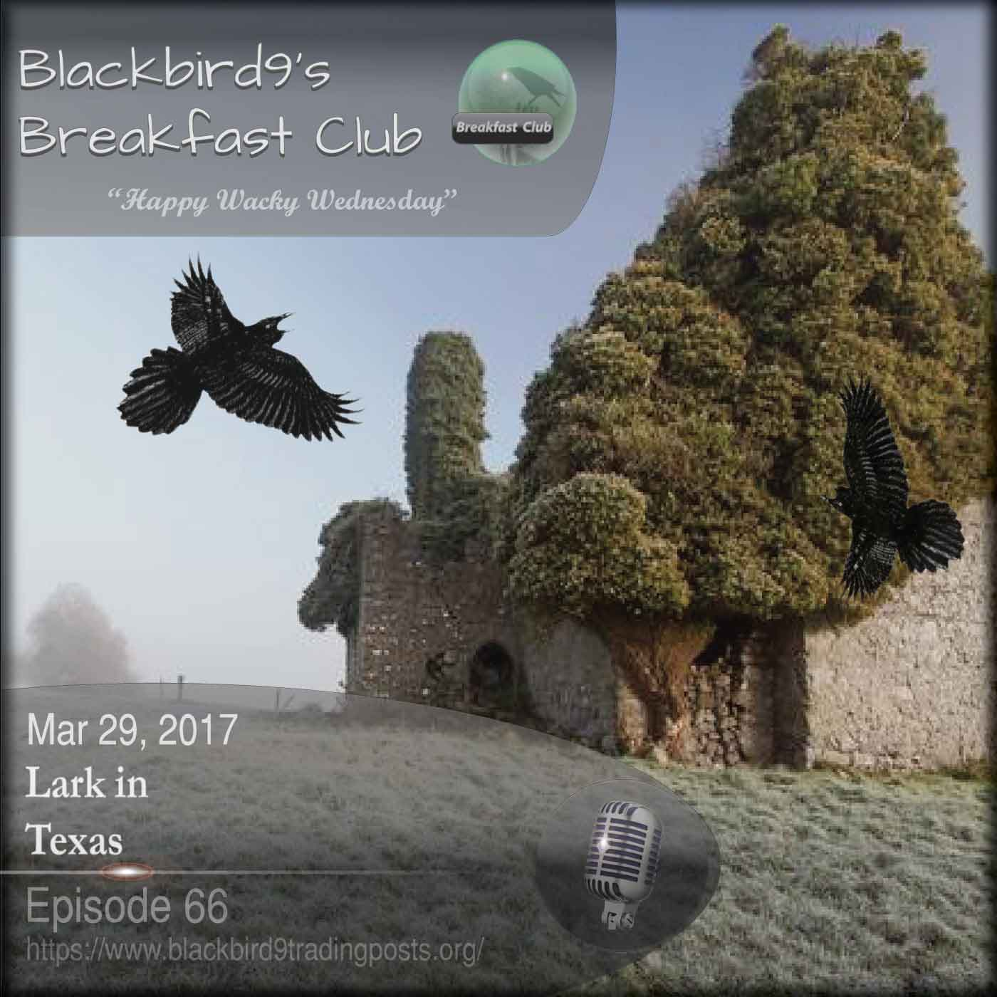 Lark In Texas - Blackbird9