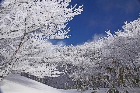 snow&trees