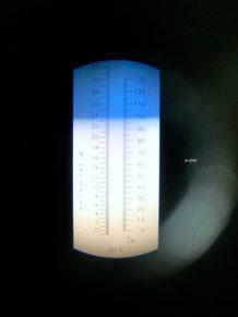 Blick durch das Refraktometer-Okular bei einer Pinot gris Messung
