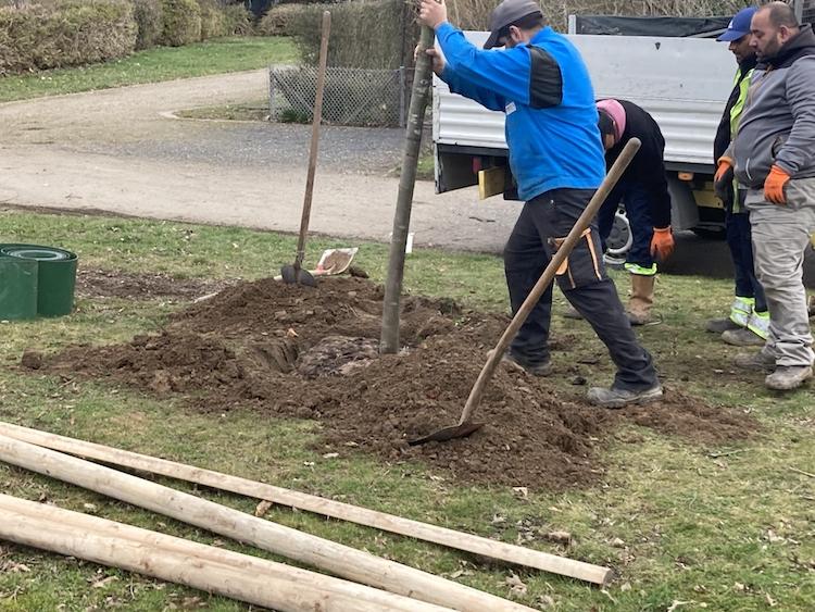 - folglich wird der Baum aufgerichtet -