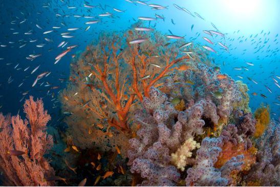Korallenriff in Raja Ampat, Indonesien ©Pindito