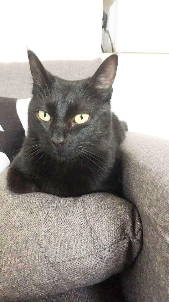 vraie bonne chatte noire