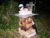 日本ミツバチ巣箱梱包