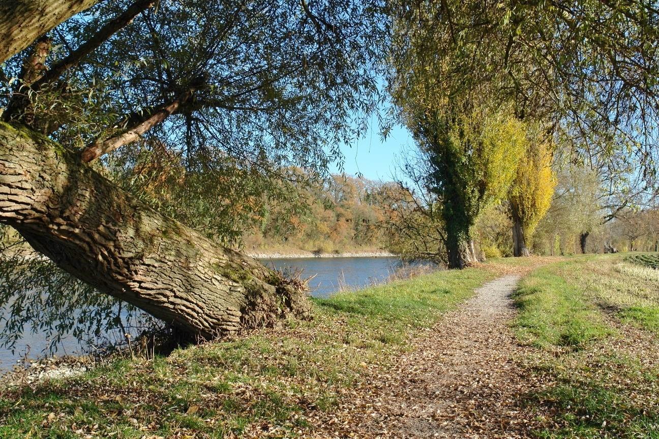 Das nur 150 m entfernte Rhein-Ufer als herrliche Naturlandschaft