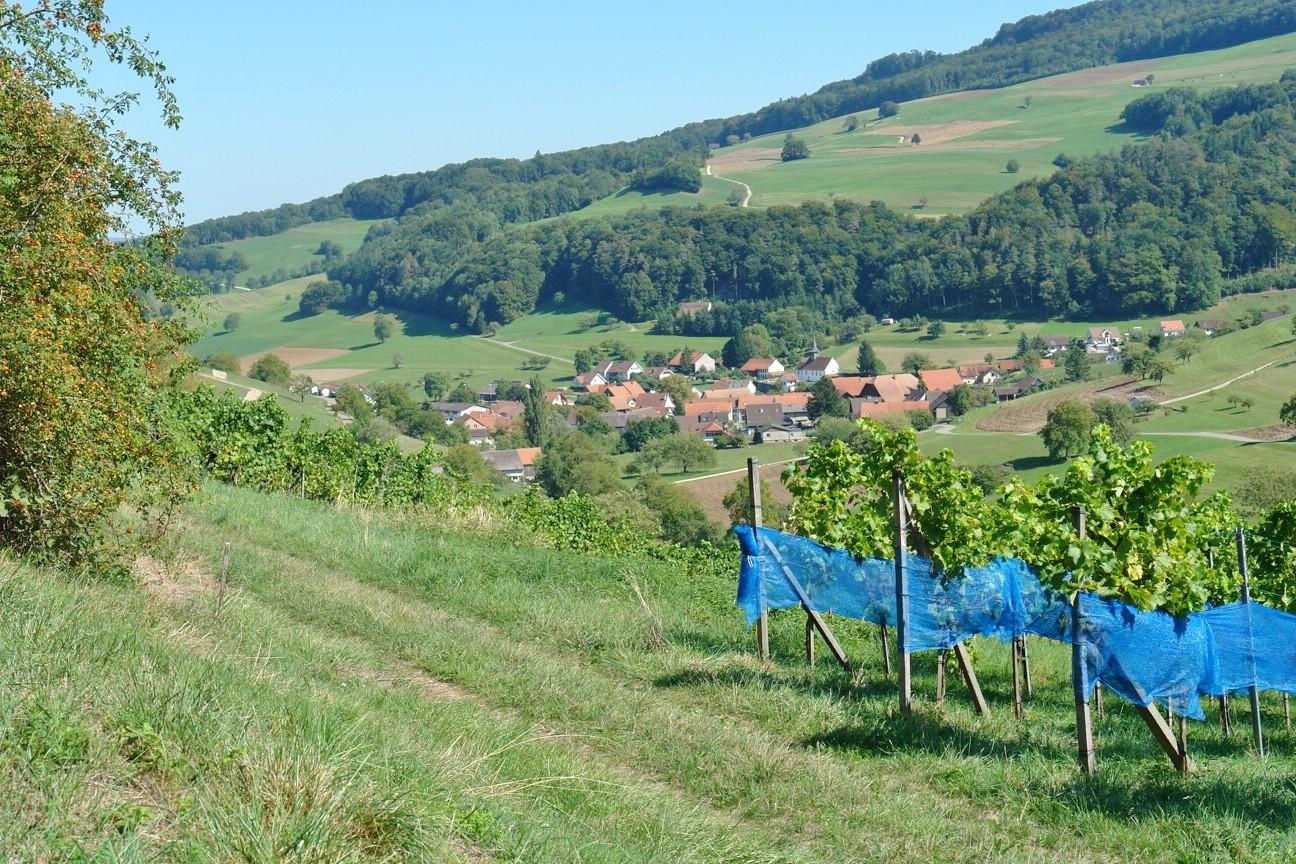 Malerischer Blick hinunter auf Thalheim