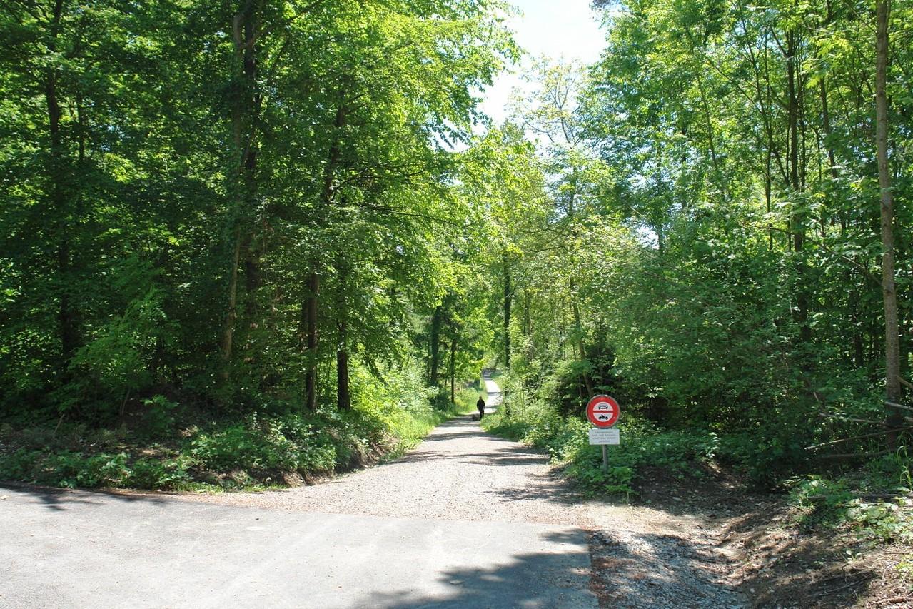 Direkt an der Grundstücksgrenze des Mehrfamilienhauses beginnt ein Waldstück