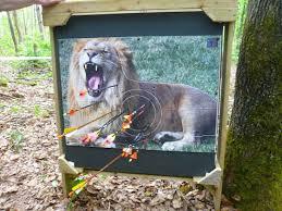 Tir à l'arc nature lion
