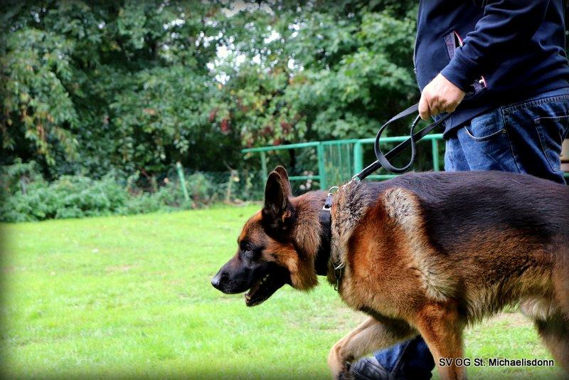 Dyke (Deutscher Schäferhund) Hundeführer Manfred N.