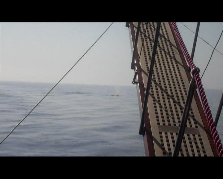 Incontro con una balena