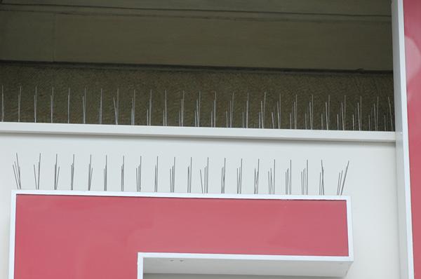 Tauben-Abwehrsystem mit Spikes