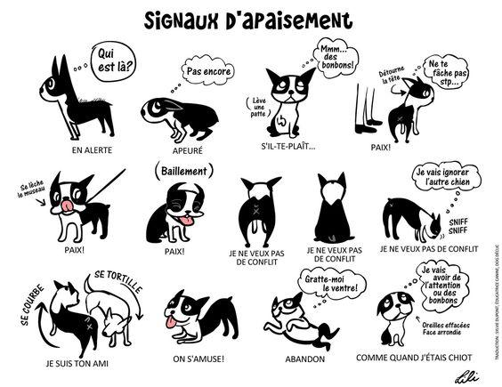 signaux-apaisement-chien