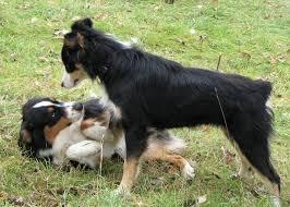 relation-chiens