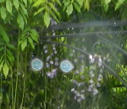 Garten Faoug  2016
