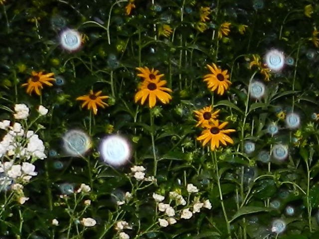Garten Faoug