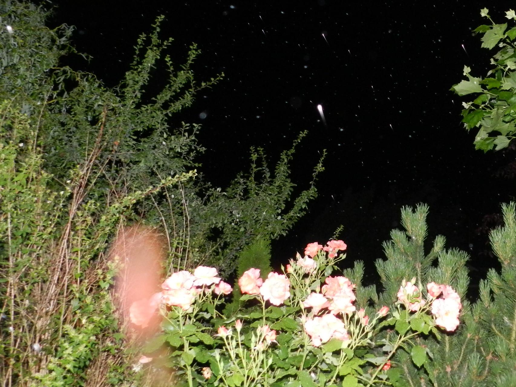Blumengeistwesen
