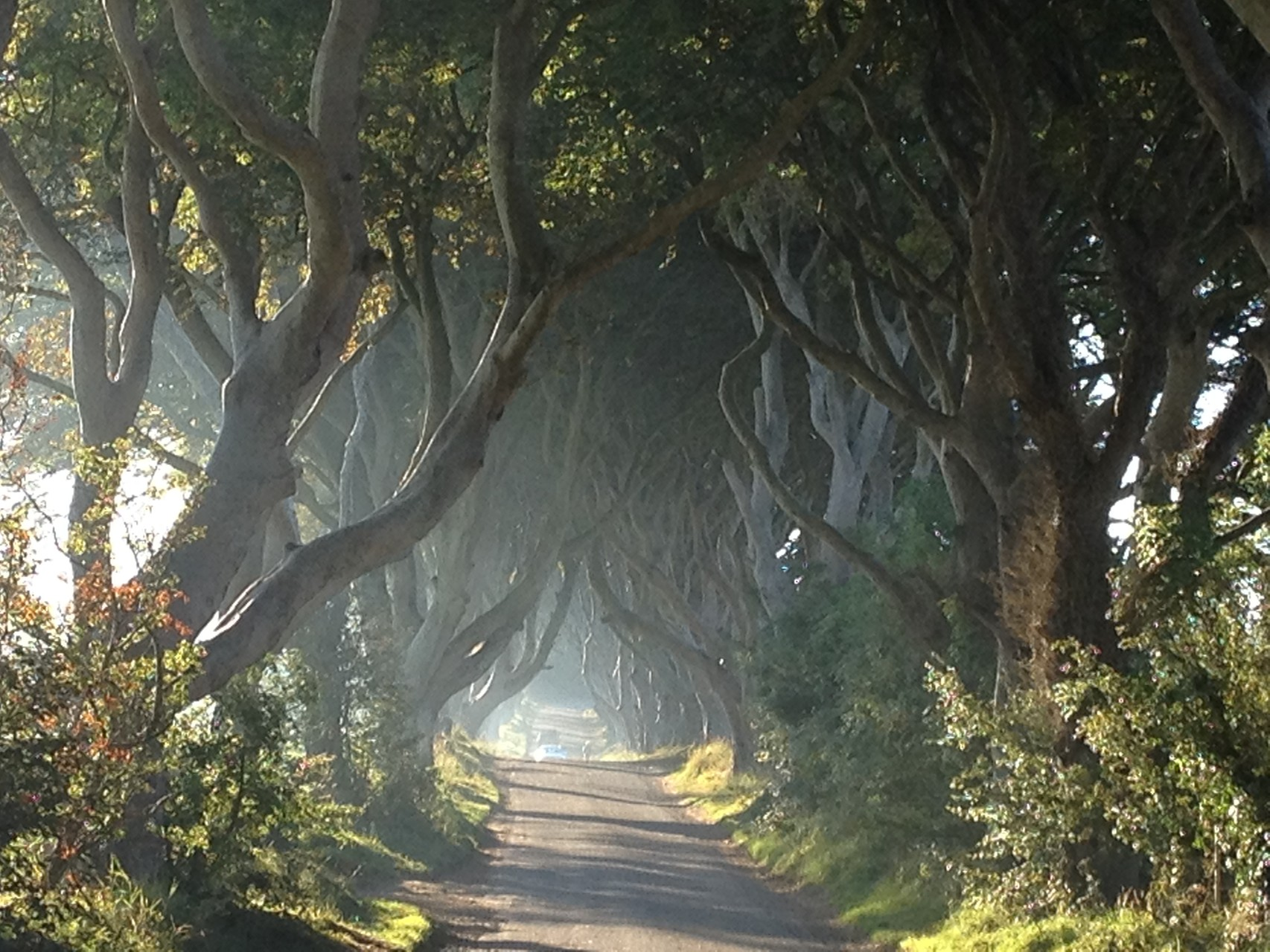 Dark Hedges, Nord Irland 2015