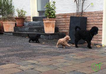 Yuna wird im Hof auf Schritt und Tritt verfolgt...