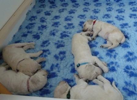 Am Ende des Tages sind alle glücklich und zufrieden wieder eingeschlafen...