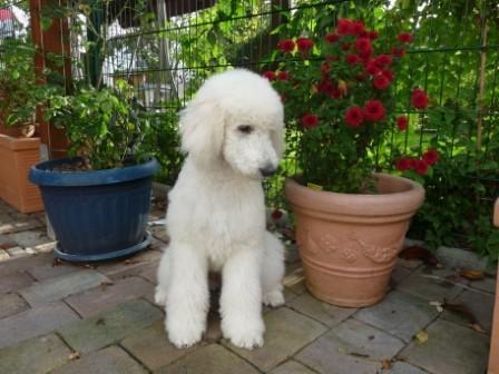 Crispina mit 4 Monaten