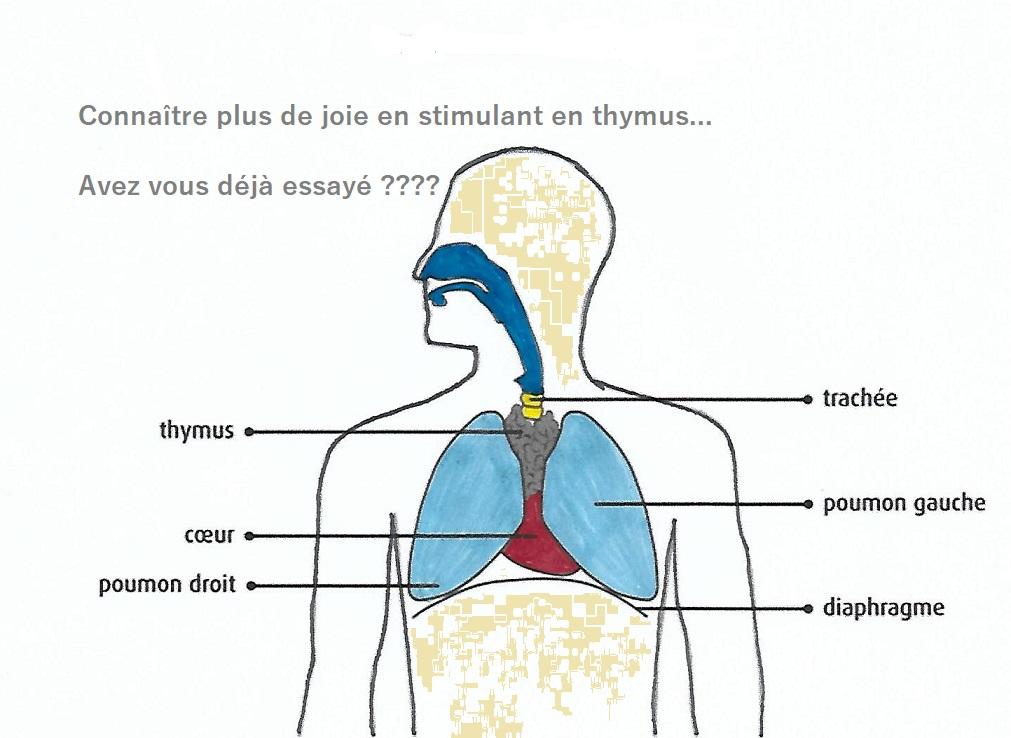 STIMULER SON THYMUS