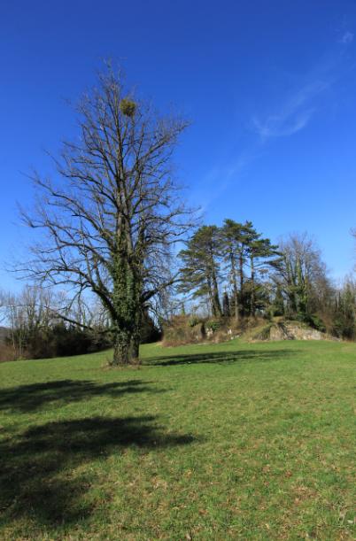 le château de Béatrice