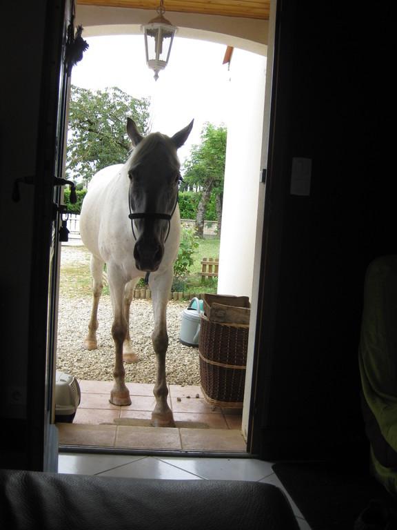 Naya ne voulant pas attendre son le veto seule dans le jardin rentre dans la maison