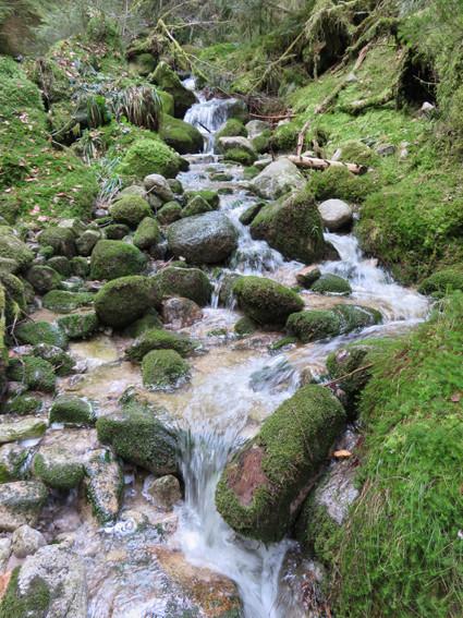 Ruisseau vosgien